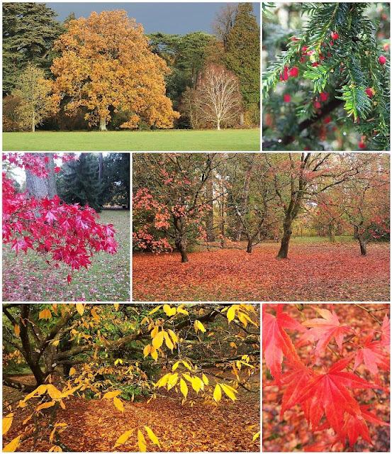 Autumn at Westonbirt Arboretum 2018 collage