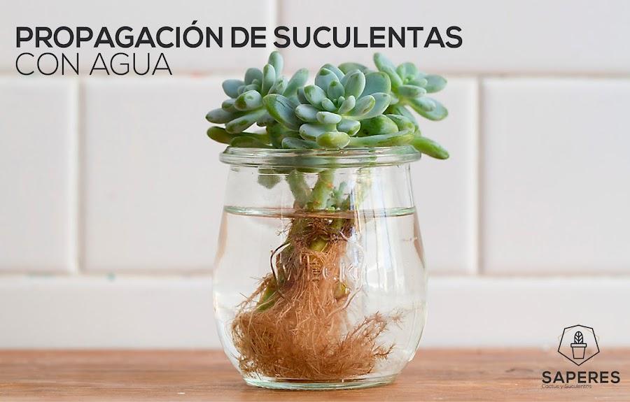 Plantas de agua for Como cultivar plantas ornamentales