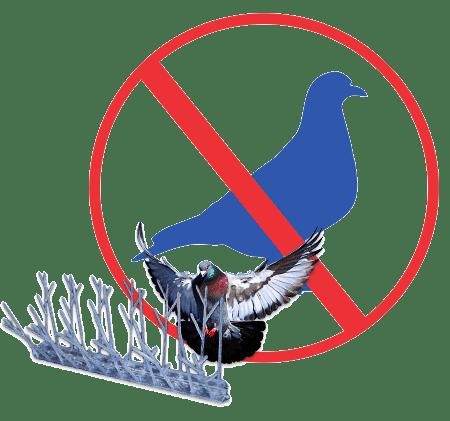 Limpeza e desinfecção devido a pombos