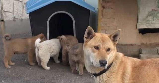 Собака и ее крохотные щенки пришли в дом к незнакомцу…