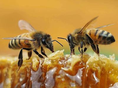 how to start honey bee business