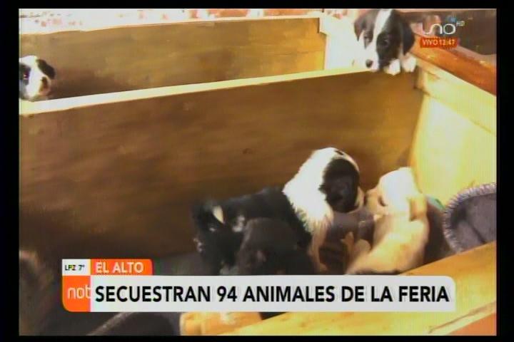 Operativo coordinado logra rescatar 94 animales de la Feria 16 de Julio de El Alto