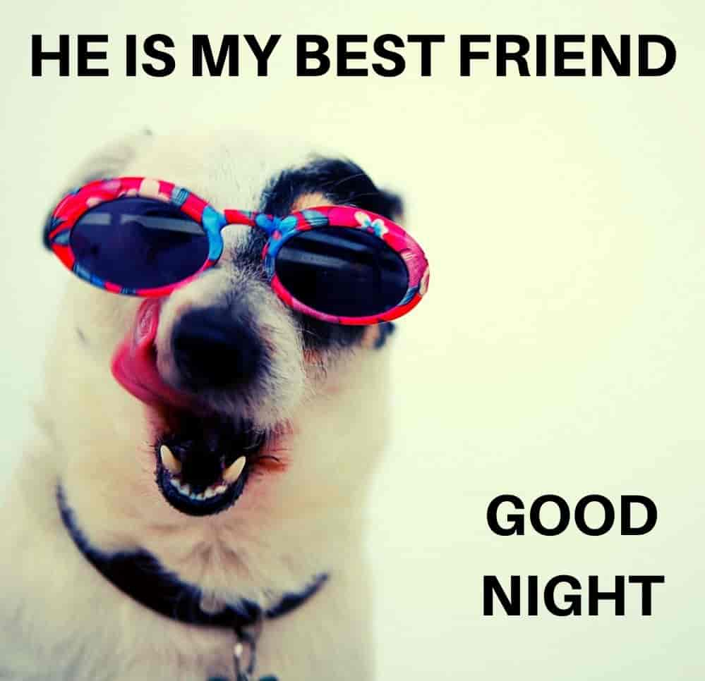 he-is-my-best-friend-good-night
