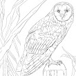 Color & Drawings: Coloring Pages For Adults