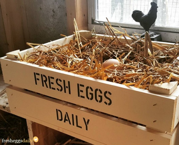 All About Chicken Coop Nesting Boxes Fresh Eggs Daily 174
