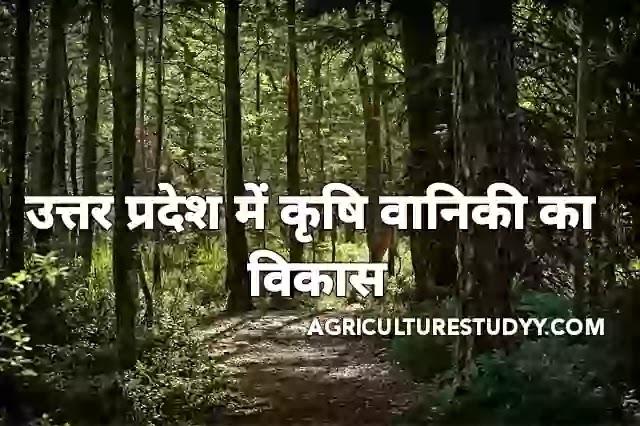 उत्तर प्रदेश में कृषि वानिकी का विकास एवं कार्य योजनाएँ, krishi vaniki, सामाजिक वानिकी, उत्तर प्रदेश में वानिकी की समस्या एवं निदान, वन निगम, वानिकी,