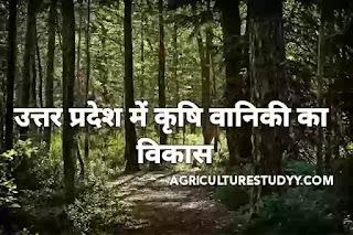 उत्तर प्रदेश में कृषि वानिकी का विकास एवं कार्य योजनाएँ, उत्तर प्रदेश में वानिकी की समस्या एवं निदान, प्रदेश में वानिकी के लक्ष्य एवं कार्य योजनाएँ,