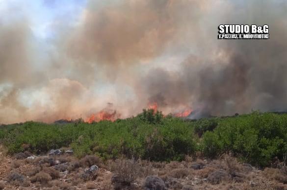 Αργολίδα: 1 εκατ. ευρώ εκτιμάται από την Περιφέρεια η δαπάνη για αποκατάσταση ζημιών από τις πυρκαγιές