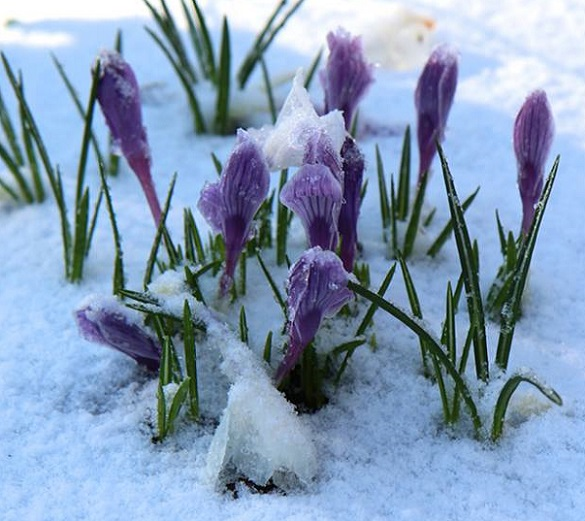 Snow On First Day Of Spring Makes Me >> It S Not About Me Spring Has Sprung