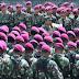 645 Prajurit Korps Marinir Kogasgabpad Sulteng Kembali ke Markas