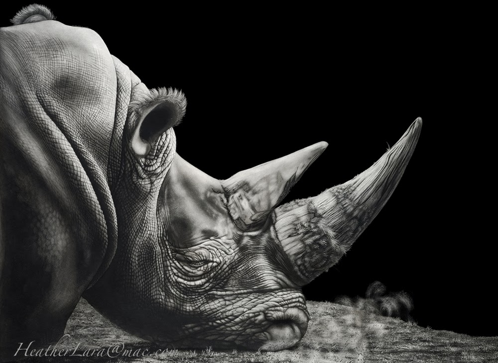 10-Rhino-B&W-Heather-Lara-Hyper-realistic-Animal-Scratchboard-Drawings-Wildlife-www-designstack-co