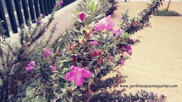 Flores cubierta vegetal tanque de tormentas
