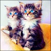 Cat Wallpapers HD Apk Download for Android