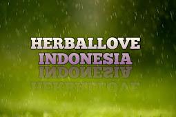 Dicari Distributor  Agen Team Leader Founder Di Seluruh Indonesia