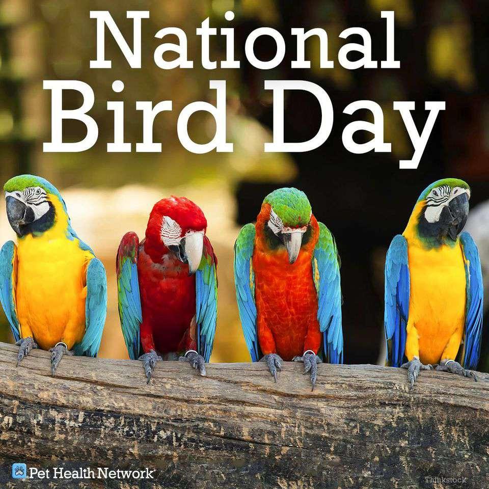 National Bird Day Wishes Photos