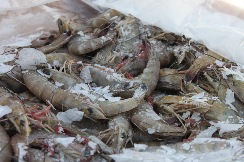 Frozen Shrimp Export Import Buying Guides - Frozen Shrimp Suppliers