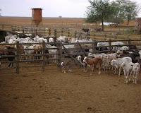 vende fazenda na bahia