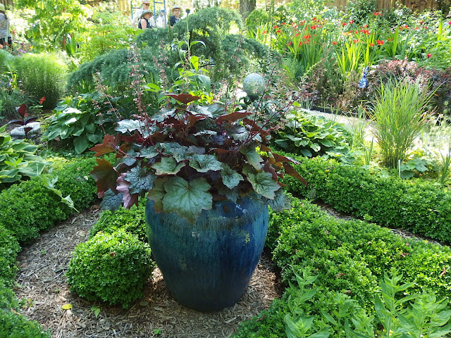 A huge blue pot and Heuchera