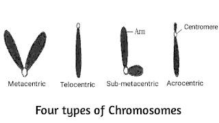 Chromosome Types