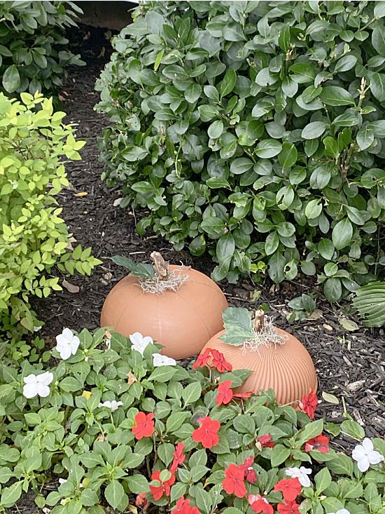 Garden pumpkin patch