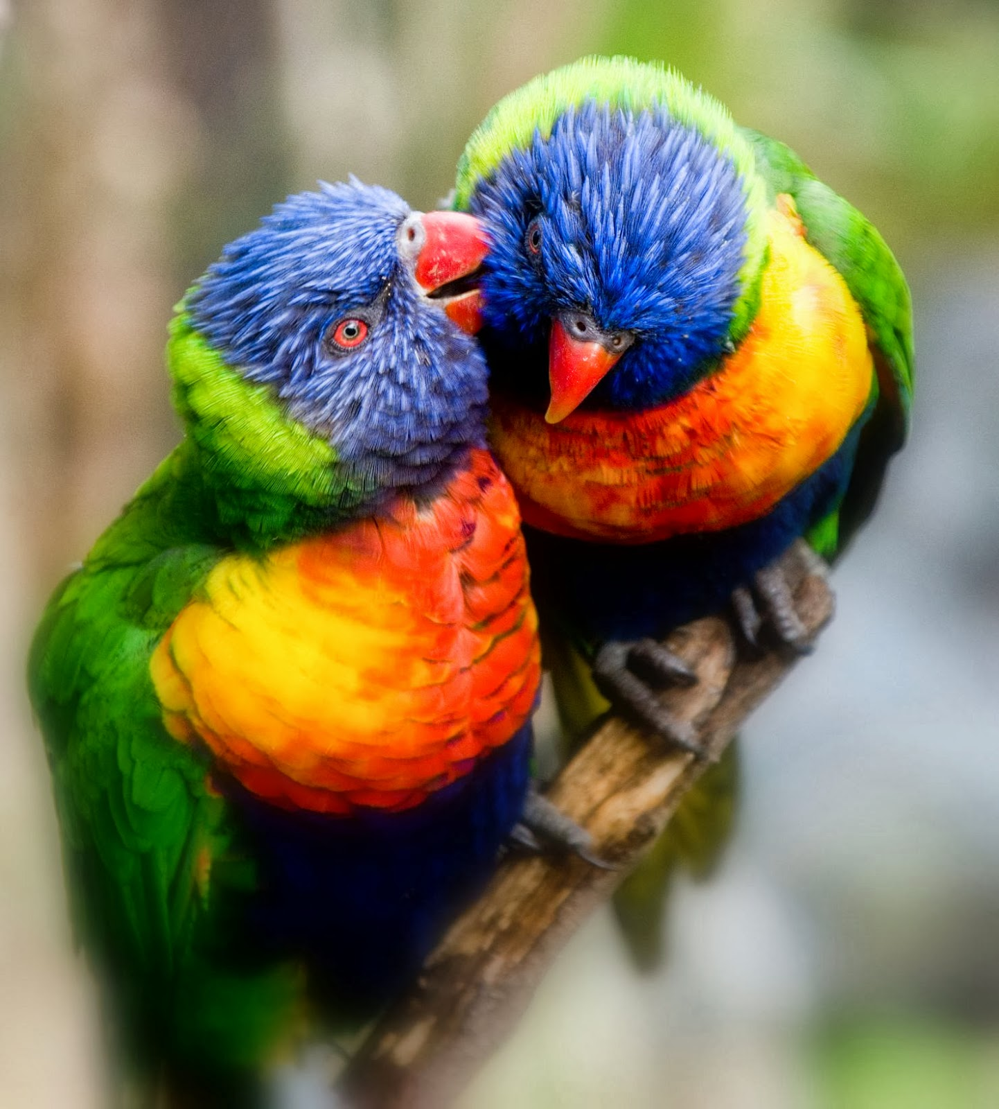 Birds: Beautiful Nice And Lovely Birds Images
