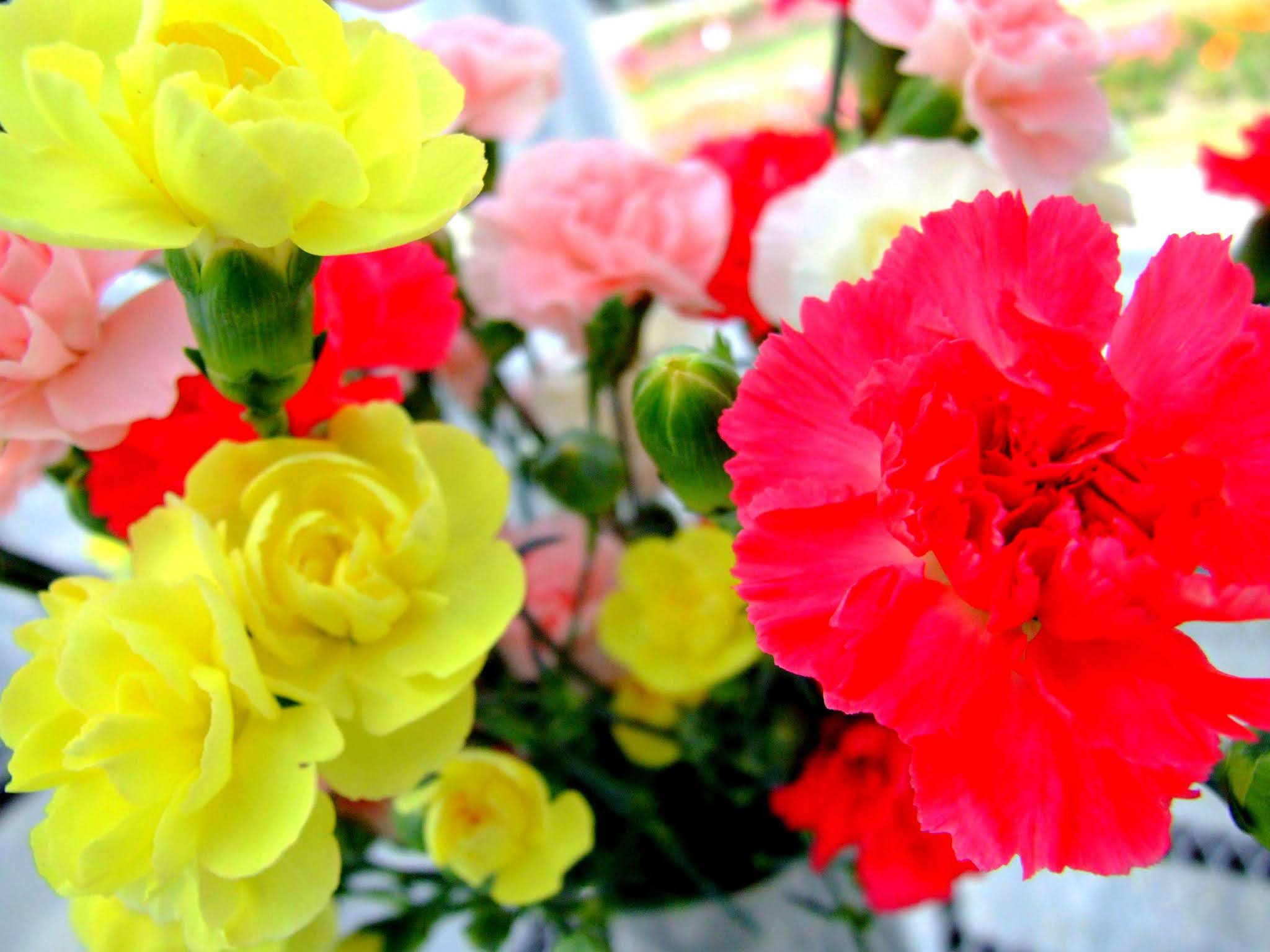 ビビットな赤と黄色のコントラストが美しい、カーネーションの花束の写真素材です。母の日のアイキャッチなどにおすすめですよ。