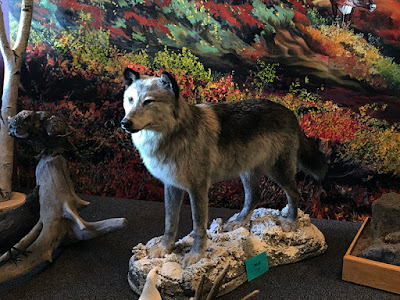 Stuffed Wolf at the Alaska Fish & Game where we bought our Fishing License
