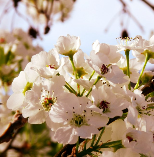 spring blossom photography: growcreative