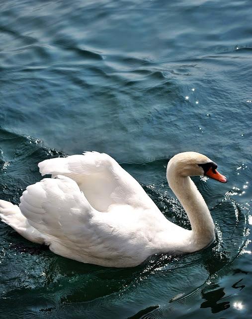 Ferienunterkunft am Gardasee