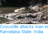 https://sciencythoughts.blogspot.com/2018/12/crocodile-attacks-man-in-karnataka.html