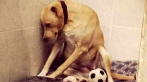 Pup Once Called 'The Saddest Dog in the World' Is Looking for a Home Again