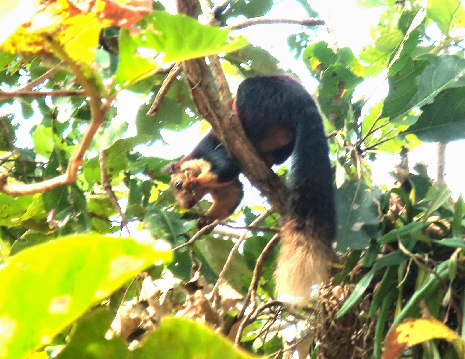 The giant squirrel that grabbed our attention