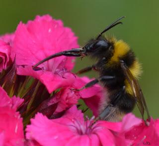 Insekten, insekte, insektet, intsektuak, insekti, Насекоми, insekter, insects, Putukad, Hyönteiset, insectes, έντομα, serangga, feithidí, skordýr, insetti,