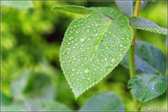 ảnh lá xanh còn đọng những hạt mưa