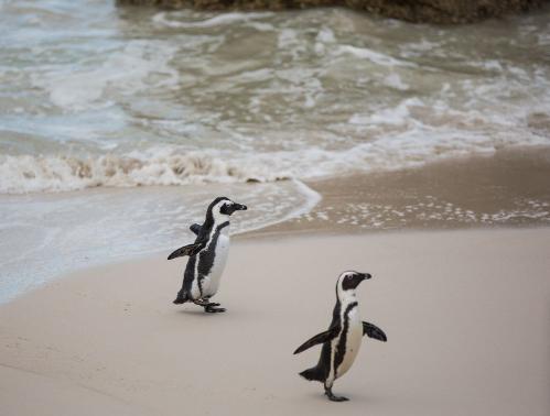 Trip Road Paling Indah di Dunia - Cape Town, Afrika Selatan