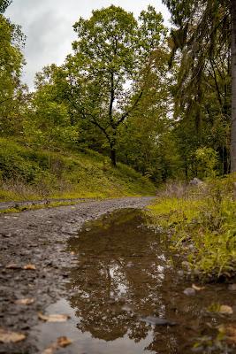 Wildwiesenweg – Eitorf | Wandern in der Naturregion-Sieg | Erlebniswege Sieg 12
