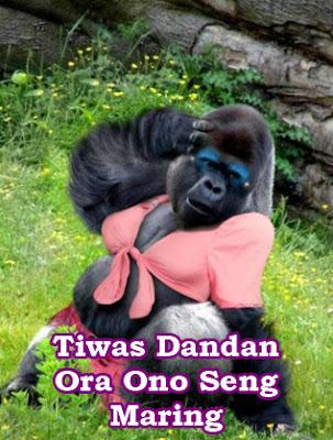 foto gorila gokil dan lucu baju pink