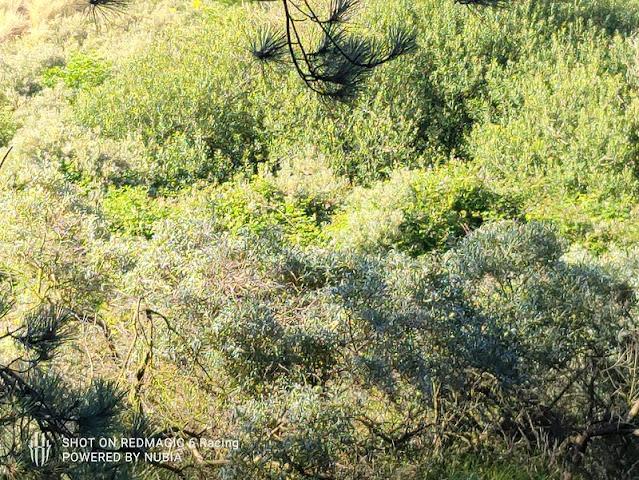 Nubia Red Magic 6R Camera