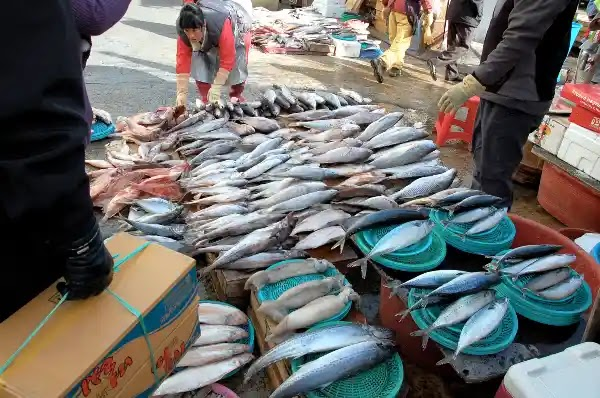 Things to Do in Busan : Jagalchi Fish Market