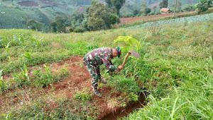 Upaya Serius Penghijauan KBU, Satgas Sektor 22 Sub 17 Melakukan Perawatan Pohon