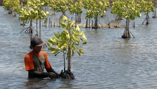 pantai, pesisir, hutan  mangrove