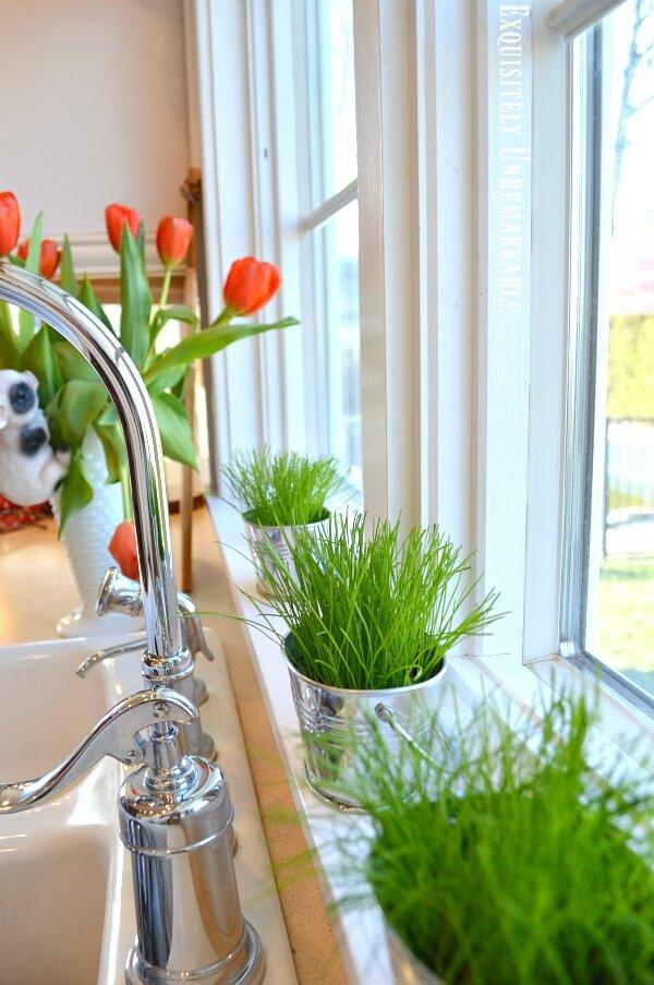 Green Grass In Pots On The Windowsill