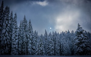 Desktop HD Wallpaper  Winter Fir Snow Forest