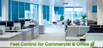 Mourier Specific Pest Control for Different Offices Has Made It a Worthy Service Provider
