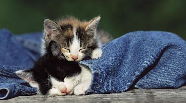 Kucing Melindungi Tuanya Dari Roh Jahat