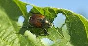 Ruang Lingkup Ekologi Serangga