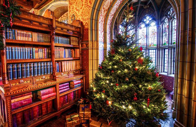 kitaplar ve çam ağacı