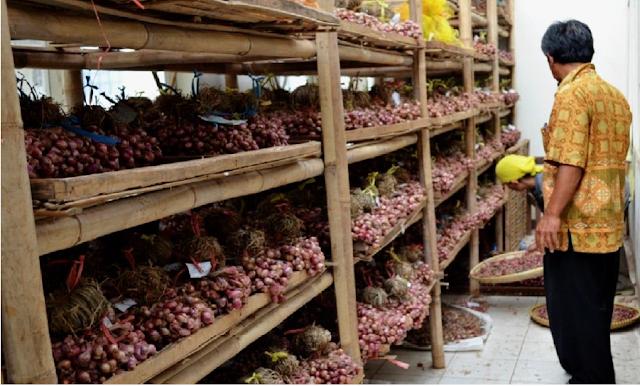 Umbi bawang merah disimpan dengan cara menggantungkan ikatan ganda (gedengan) pada rakrak bambu dalam gudang penyimpanan