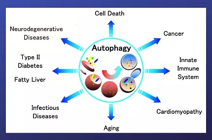 autophagy-in-hindi