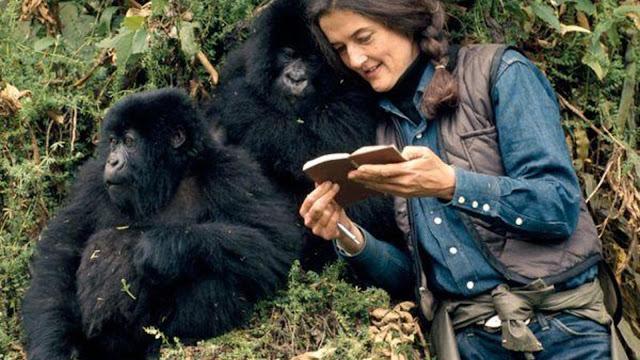Dian Fossey reading book gorillas
